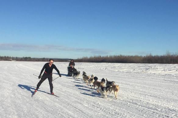 Poles catching dog team